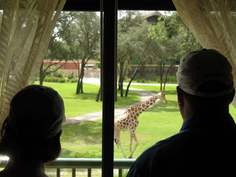 Dinsey's Animal Kingdom Lodge a room with a view